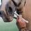 Hur ofta ska man avmaska hästen?