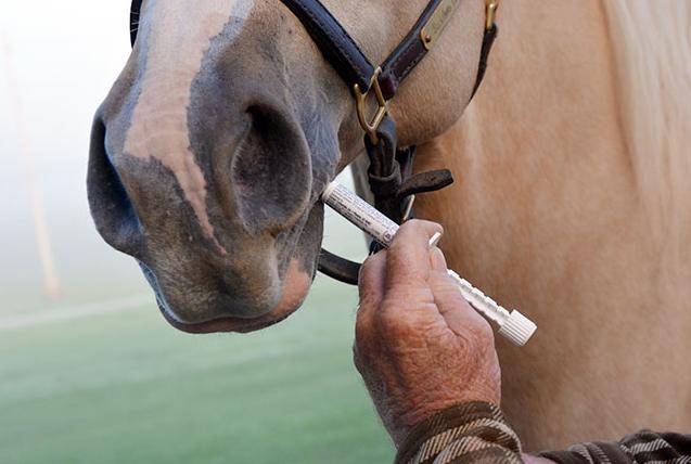 När ska man avmaska hästen?