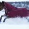 Bäst vintertäcke till häst 2021 – håll hästen varm vid kallt väder