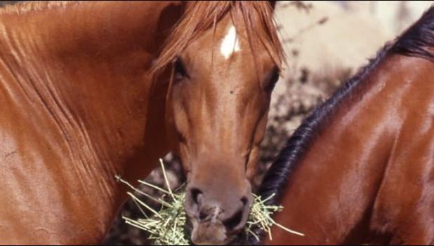 Beräkna foderstat häst