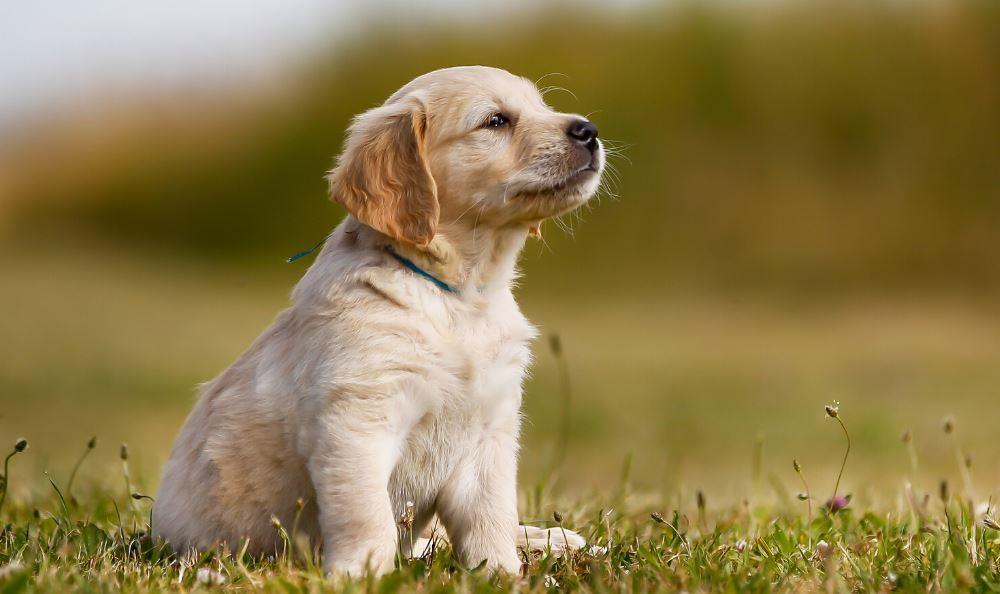 Vad kostar det att kastrera en hund?